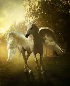 Pegasus are the horse of the sky like angels are the people.