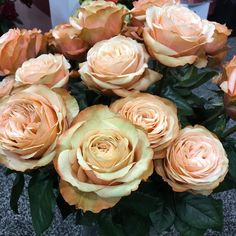 What do you think about this color rose Kahala! a beige with creme / pale yellow bronze edges. #weddingroses #flowersfromallovertheworld #passionateaboutflowers #ifechicago2016 #roses #rosesoninstagram #IFE2016