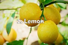 lemon - quick relief from acne