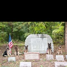 Happy K-9 Veteran's Day! March 13, 1942 the official start of the United States K-9 Corp