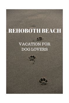 Why Rehoboth Beach, DE makes a great vacation spot for dog owners and lovers alike! #Doglovers #Blog #DelawareVacation #Beaches #Vacation #Family #LoveDogs #Dog #Akita