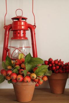 .red lanterns are perfect for Fall