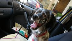 undefined Pet Taxi, Pets, Animals, Animales, Animaux, Animal, Animais, Animals And Pets