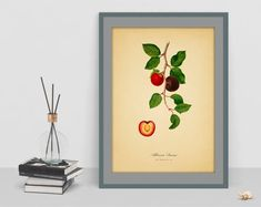 Botanical Vintage plum watercolour digital art poster old paper picture antique home print wall school chart decor cubicle drawing Botanical Wall Art, Old Paper, Cubicle, Wall Prints, Watercolour, Plum, Digital Art, Chart, Antiques