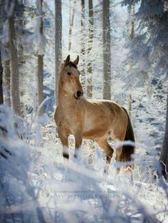 Beauty in the snow, Winter horse. All The Pretty Horses, Beautiful Horses, Animals Beautiful, Beautiful Gorgeous, Simply Beautiful, Horses In Snow, Wild Horses, Animals And Pets, Cute Animals