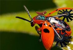 Futuristic Cyborg Animals1 Futuristic cyborg animals and insects http://www.petsfoto.com/futuristic-cyborg-animals-insects/