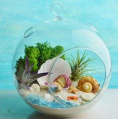 Mermaid Beach Terrarium Kit