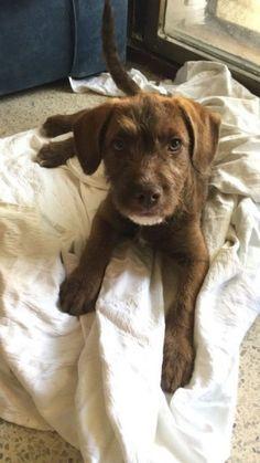 Esta preciosa cachorra de ojos verdes fue encontrada en mitad de la calle en un barrio de Sevilla. Los... #adoptar #mascotas #adopcion #perros #gatos