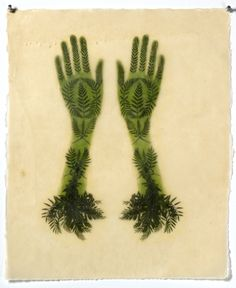 "In the artist's words, ""I begin by collecting ferns and… Illustrations, Illustration Art, Kiki Smith, Street Art, Art Graphique, Create Image, Natural Forms, Ferns, Printmaking"