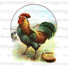 Rooster Digital Graphic Printable Image Color Illustration Download Vintage Clip Art. Printable high quality digital graphic for printing, iron on transfers, t-shirts, pillows, tote bags, and much more. Real vintage clip art. This graphic is large and high quality, size 8½ x 11 inches. Transparent background PNG version included.