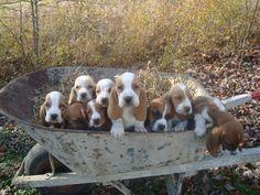 Diane and Ken at onedamdeer Basset hounds