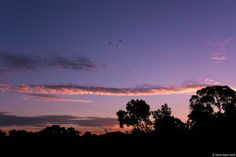{Sunsets} Sunset 63 4th March 2014 © Violet Ashes 2014 #CanonEOS450D #sunset #sky #VioletAshes #Adelaide #SouthAustralia #Australia