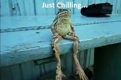 WATCH: Frog Sitting on a Bench…Like a Human!