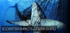 Ecosystem impacts of overfishing