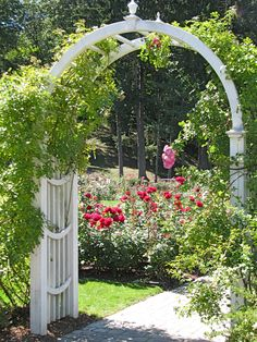 a bed of red roses beyond an entry arbor at the Schenectady Central Park Rose Garden - 31July2010