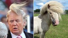 11 Animals That Are Donald Trump Look Alike+ Donald Trump Toupee, Donald Trump Hair, Hair In The Wind, Wind Hair, Ugly Dogs, Horse Face, Picture Fails, Hollywood, Gremlins
