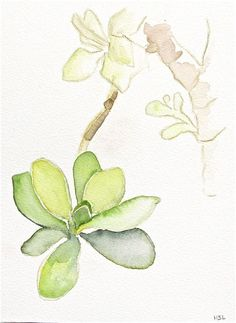 succulent watercolor. this is gorgeous