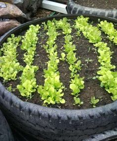 Creative Tire Raised Garden beds ideas