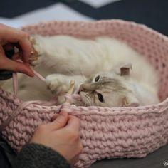 T-Shirtgarn- Haus für Kitty