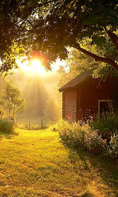 Country Sunbeams