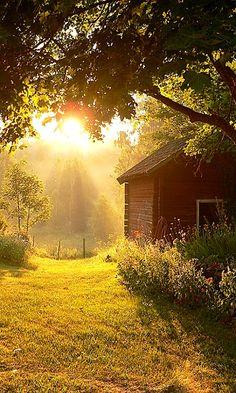Country Sunbeams
