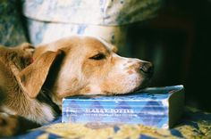 dog, book, and harry potter εικόνα