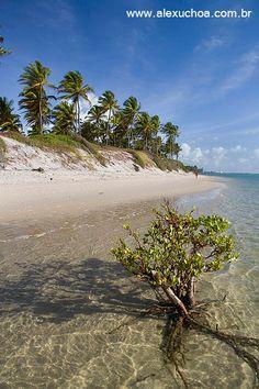 Praia de Muro Alto, Porto de Galinhas, Ipojuca, Pernambuco - BRASIL