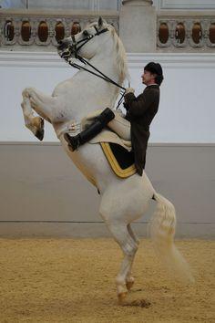 Spanish Riding School Vienna.