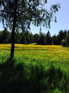 2014 #summer #yellow #green #sun