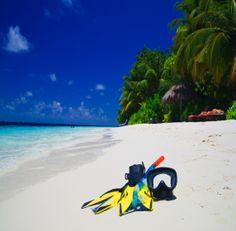 Lors de votre voyage aux Maldives, la plongée est le maître mot. La découverte des fonds coralliens est saisissante et offre une grande variété d'espèces: barracudas, tortues, raies mantas... #maldives #plongee