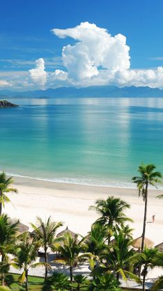 #beachlife #shimonfly