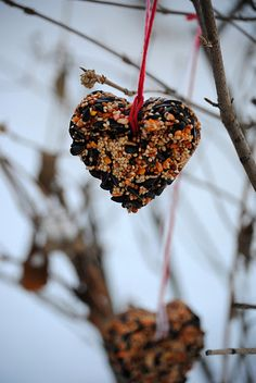Heart-Shaped Bird Feeder made with 3 cups birdseed, 2 – ounce unflavored gelatin packet, cookie cutters, and twine Mens Valentines Gifts, Valentines Day Weddings, Valentine Treats, Valentines Diy, Funny Valentine, Fall Crafts, Crafts For Kids, Diy Crafts, Holiday Crafts