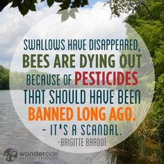 Swallows have disappeared, bees are dying out because of pesticides that should have been banned long ago. It's a scandal. - Brigitte Bardot #quotes #inspiration #change #bees #pesticides #evolution #environment #quote