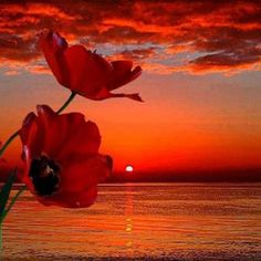 Poppies in the sunset . love the poppies and wonderful sunset also ^_^ ♥ Amazing Sunsets, Beautiful Sunrise, Belle Photo, Pretty Pictures, Amazing Pictures, Beautiful World, Beautiful Places, Simply Beautiful, Beautiful Flowers