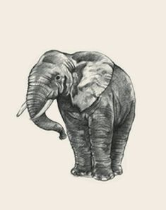 animal photo collection for Animal + All Animals Photos, Animals Images, Flashcards For Kids, Animal Cards, Stuffed Animals, Whale, Elephant, Pictures, Collection