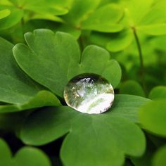 a drop of rain on a green leaf -