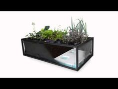 A horta inteligente que só precisa ser regada a cada 15 dias e permite produzir alimentos em qualquer lugar