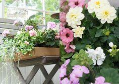 Kesäkukat pastellien sävyissä ja mummolafiilis puutarhassa