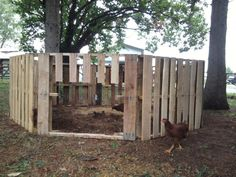 duck and chicken house