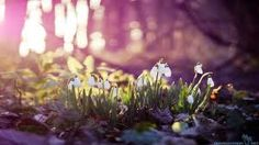 simple  spring is coming spring is closer soul is lighter sun is brighter energy is greater   :)