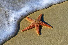 Animal, Beach, Bubbles, Coast