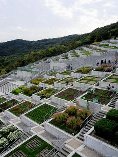 Awaji Yumebutai, Tadao Ando, 1999 | Flickr - Photo Sharing! Reminds me of the terraces in Peru.