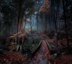 I think little red riding hood is just up ahead Completely magical Enchanted forest in Bulgaria! by Emil Rashkovski Beautiful World, Beautiful Places, Beautiful Forest, Foto Nature, Landscape Photography, Nature Photography, Photography Tips, Magic Places, Photos Voyages