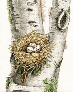 Cardinal's Nest in Birch Tree - watercolor print by Tracy Lizotte