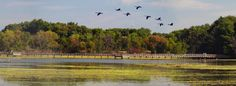 John Heinz National Wildlife Refuge at Tinicum was established in 1972 for the purpose of preserving, restoring, and developing the natural ...