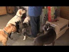 Entrena a tu perro en 5 fáciles pasos - VeoVerde