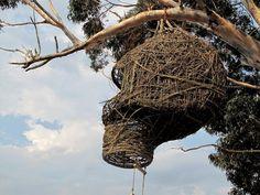 original weavers nest   Real-Life Human Nests by Animal Farm