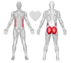 Buttocks - Find Exercises for Men & Women - FreeTrainers.com