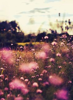 Meadow. Pink flowers.
