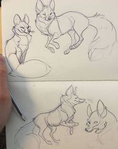 Ideas drawing wolf cartoon art for 2019 Animal Sketches, Animal Drawings, Cool Drawings, Art Sketches, Drawing Animals, Pet Anime, Doodle Drawing, Realistic Sketch, Fox Art